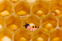 Honey bee baby in honeycomb. Newborn baby in bee outfit sleeping in a real honeycomb Royalty Free Stock Photo