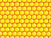 Honey bee background royalty free stock image