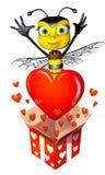 Honey Bee Box Full Of Hearts Stock Images