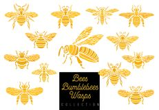 Honey bee bumblebees wasps set sketch style collection insert wi Stock Images