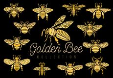 Honey bee bumblebees wasps set sketch style collection insert wi Royalty Free Stock Images