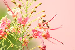 Honey bee on duty Royalty Free Stock Images