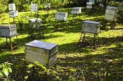 Honey Bee Farm Boxes Stock Photo