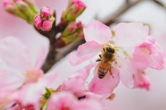 Honey bee on flower stock photos