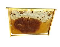 Honey bee frame royalty free stock images