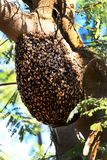 Honey bee hive. Beautiful shot of honey bee hive royalty free stock images