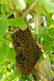 Honey bee hive Stock Photography