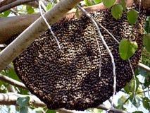 A Honey Bee hive Royalty Free Stock Photo