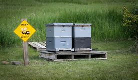 Honey Bee Hives Royalty Free Stock Photography