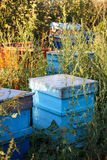 Honey bee hives Stock Photo