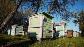 Honey bee hives in autumnal apple garden stock footage