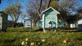 Honey bee hives in autumnal apple garden stock video