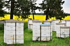 Honey Bee Hives blanco Imagenes de archivo