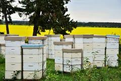 Honey Bee Hives blanco Imágenes de archivo libres de regalías