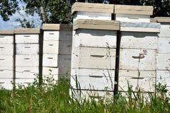 Honey Bee Hives blanco Foto de archivo