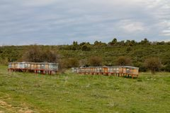 Honey Bee hives in the field stock photo