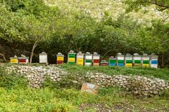 Honey bee hives in green forest Royalty Free Stock Images