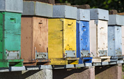 Honey bee hives Stock Image