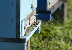Honey bee hives Stock Image