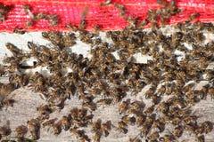 Honey bee hives Royalty Free Stock Photos
