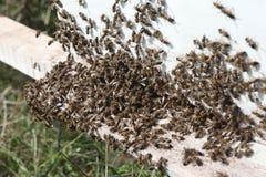 Honey bee hives Royalty Free Stock Photography