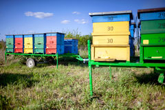 Honey bee hives Royalty Free Stock Image