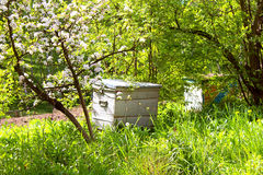 Honey bee hives in spring garden Royalty Free Stock Image