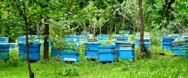 Honey Bee Hives Between Trees Fotografie Stock Libere da Diritti
