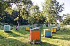 Honey Bee Hives Between Trees in de Zomertuin Stock Afbeeldingen