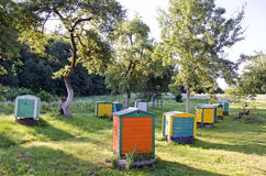 Honey Bee Hives Between Trees im Sommer-Garten Stockbilder