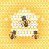 honey bee and honeycomb Stock Image