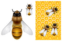 Honey Bee and Honeycomb background Royalty Free Stock Images