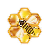 Honey bee and honeycomb isolated on white Royalty Free Stock Photography