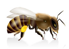 Honey Bee Illustration Immagine Stock