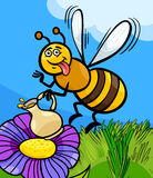 Honey bee insect cartoon illustration Stock Photography
