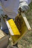 Honey Bee Keeper con el cepillo y el peine Imágenes de archivo libres de regalías