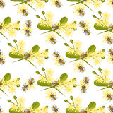 Honey bee with linden blossom seamless pattern . Stock Photos