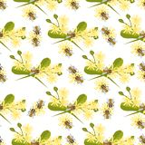 Honey bee with linden blossom seamless pattern vector. Honey bee with linden blossom vector. Bee seamless pattern honeycomb linden blossom hexagon nature Royalty Free Stock Photography