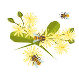 Honey bee with linden blossom vector. Stock Photo