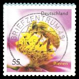 Honey Bee, mellifica dos Apis Fotos de Stock Royalty Free