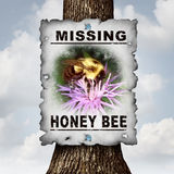 Honey Bee Missing. Concept or disappearing bees message sign as an agriculture symbol for farming pollination crisis as the decline and vanishing  pollinating Stock Photo