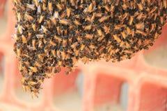 Honey Bee Nest natural Fotografía de archivo libre de regalías