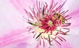 Honey Bee på arbete - makro royaltyfri bild