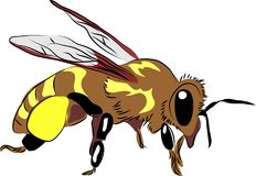 Honey bee with pollen Stock Photography