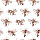 Honey Bee Seamless Pattern Schizzo d'annata di scarabocchio che avvolge il fondo di vettore Illustrazione Vettoriale