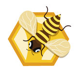 Honey bee and single honey comb unit flat design Stock Photos