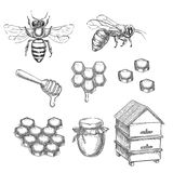 Honey and bee sketch vector illustration. Honeycombs, pot and hive hand drawn isolated design elements.  stock illustration