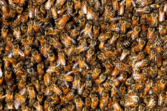 Honey bee swarm background. Honey bees in a swarm make a hive background Stock Photo