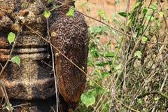 Honey Bee Swarm Royalty Free Stock Photography