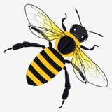Honey Bee Vector Illustration dettagliato Immagini Stock Libere da Diritti